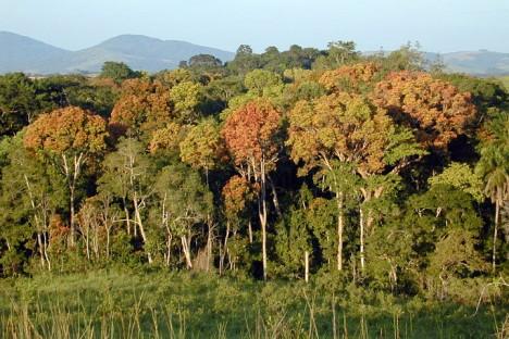 gabon_forest