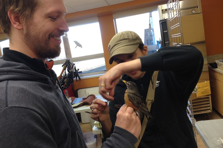 Nicole and Brian are suiting up Trail Blazer with a mini-GPS unit and harness. Photo credit: Natalie Boelman.