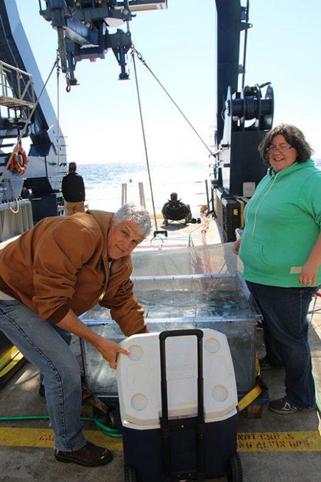 Drs. Craig Carlson (left) and Elizabeth Harvey (right) loading samples into the incubators. Photo: Susanne Menden-Deuer