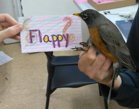 Flappy is an adult female. Her name was chosen by Ms. Murphy and Mrs. Nadler's 4th grade class. (Photo credit: Nicole Krikun)