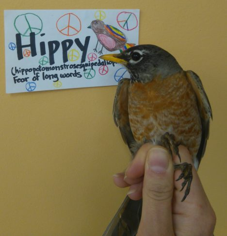 Hippy is an adult female. Her name was chosen by Ms. O'brien's 5th grade class. (Photo credit: Nicole Krikun)