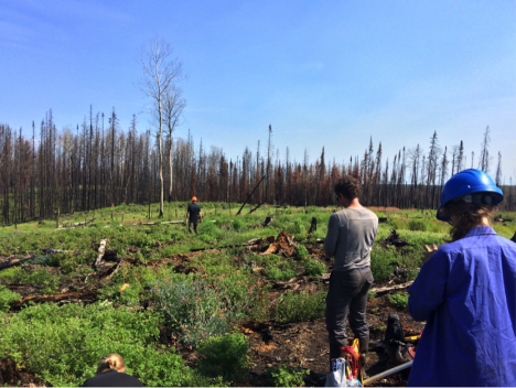 Sampling a young harvested site that burned last year. It was harvested only a year or two before it burned. (Credit: Solvik)