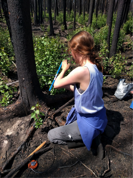 Jocelyne coring a tree to determine the age of the forest (Credit: Sander Veraverbeke)