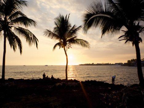 Palm trees on the shore on Kona, Hawaii (credit: Christina Williamson)