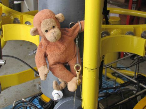 Monkey climbing over the water sample bottles on the CTD.