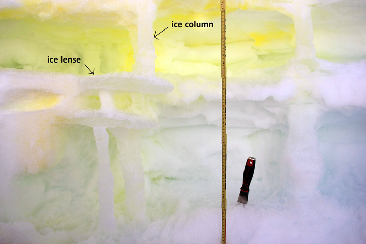 Excavating ice columns and ice lenses after spraying neon-green dye at the surface to look at water infiltration processes.