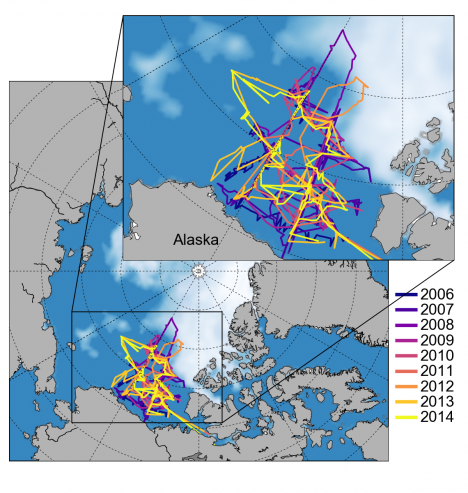 Cruise tracks from previous JOIS expeditions during 2006-2014 and the sea ice concentration around this year's summertime minimum extent on Sept. 10 (from NSIDC).