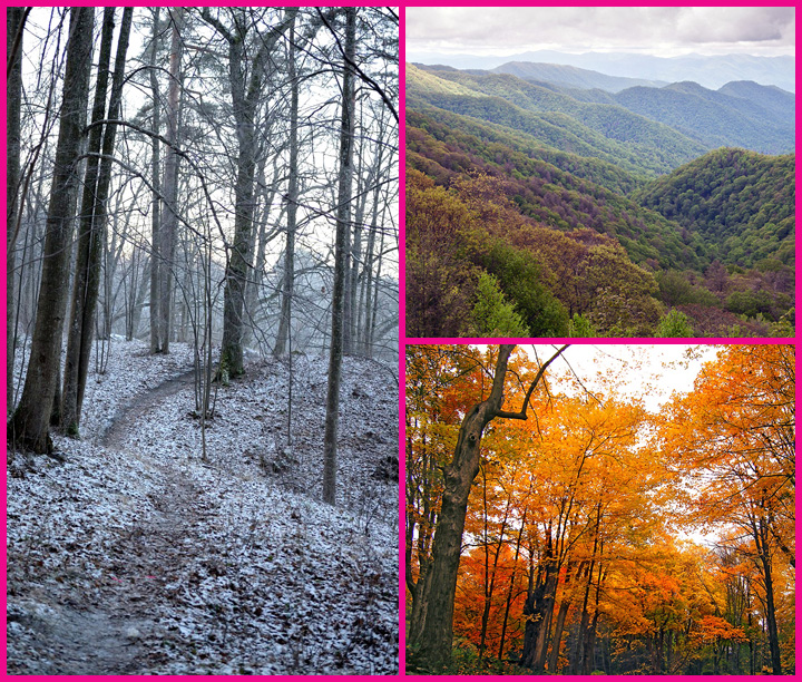 Temperate Deciduous Forest Header